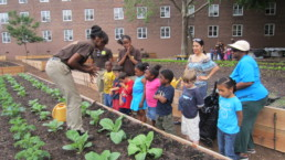 Children learning about farming and plants in New York City.