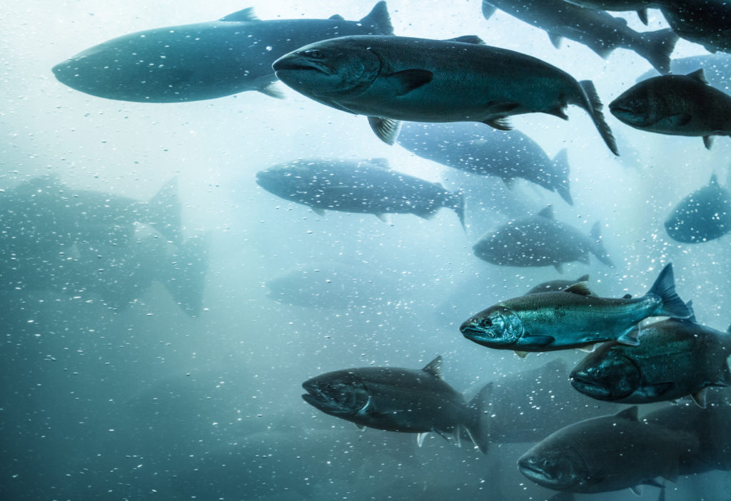 Alternative Aquaculture | Global Opportunity Explorer