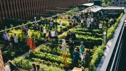 Denmark's first ever rooftop farm brings local food production to Copenhagen.