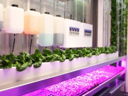 fully assembled, vertical hydroponic farming system built inside a 12m shipping container