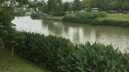 Park with a lake in CHANGDE, Hunan for mproved climate resiliency
